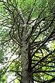 Mountaintop Forest (4) (9525576557).jpg