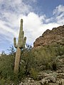 Mt. Pinter Base Loop, Tonto National Forest, Butcher Jones Trail, Fort McDowell, AZ 85264, USA - panoramio (68).jpg