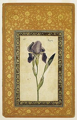 Mohammad Zaman - Blue Iris by Muhammad Zaman. Brooklyn Museum.