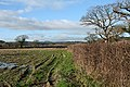 Musbury, near Millands Farm - geograph.org.uk - 294327.jpg