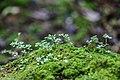 Musgos e pequenos vegetais molhados.jpg