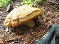 Mushroom -1 (1424947939).jpg