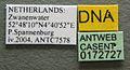 Myrmica specioides casent0172727 label 1.jpg