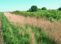 NRCSIA00045 - Iowa (2293)(NRCS Photo Gallery).tif