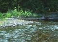 NRCSOR00026 - Oregon (5751)(NRCS Photo Gallery).tif