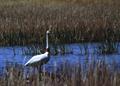NRCSSD03015 - South Dakota (6157)(NRCS Photo Gallery).tif
