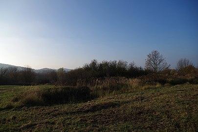 NSG HA 242 Ehemaliger Standortübungsplatz Pötzen (71).jpg