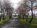Nareszcie wiosna - panoramio.jpg