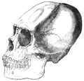 Narrative of a Voyage around the World - Indian Skull.png