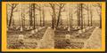 National cemetery, Arlington, Va, by Bell & Bro. (Washington, D.C.) 3.png