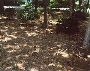 Natural landscaping - Natural landscaping with pine leaf litter mulch