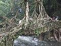 Natural Root bridge.jpg