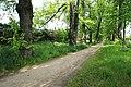 Naturdenkmal Lindenallee in Lößnitz Erzgebirge 2H1A2733WI.jpg