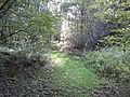 Nature Trail at Oquaga Creek.jpg