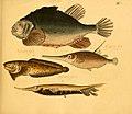 Naturgeschichte in Bildern mit erläuterndem Text (Taf. XI) (6058656527).jpg