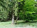 Naturpark Arnsberger Wald fd (18).jpg