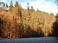 Naturpark Schönbuch in der Nähe von Waldenbuch - panoramio.jpg