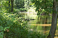 Naturschutzgebiet Elmpter Schwalmbruch Sommer 2015 -8822.jpg
