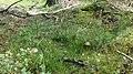 Naturschutzgebiet Lueneburger Heide-4.jpg