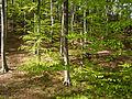 Naturschutzgebiet Nr. 158 Greifenstein (Gebiet an der Burg Greifenstein) 4 Sublocation DE-TH WDPA ID 163316 , unterhalb Kesselwarte.jpg