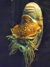 Nautilus Wiki