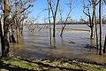 Neal Landing Apalachicola River b.jpg