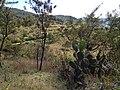 Near Capulálpam - panoramio.jpg