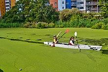 Harmful algal bloom - Wikipedia