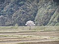 Negoya, Itoigawa, Niigata Prefecture 949-0536, Japan - panoramio (2).jpg
