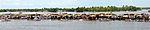 Nehru Trophy Boat Race DSW.jpg