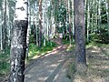 Nevyanskiy r-n, Sverdlovskaya oblast', Russia - panoramio (76).jpg