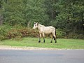 New Forest, Hampshire (461006) (9455111573).jpg