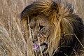 Nkomazi Game Reserve, South Africa (22652707645).jpg