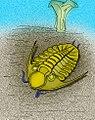 Norasaphus Norasaphites monroeae.jpg