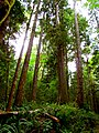 North Cascades National Park (9290003717).jpg