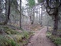Novar Forest - geograph.org.uk - 155730.jpg