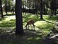 Novosibirsk Zoo - panoramio.jpg