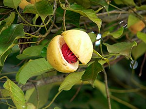 Taken on our trip to Grenada in 2011 - The nut...