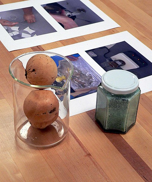 Two oak galls in a beaker and a jar of iron(II) sulfate, ingredients of iron gall ink. The papers on the table are instructions for making the ink. Photograph taken at the California State Archives, 1020