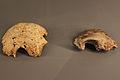 Occipital infantil cova de les malladetes (Barx) frontal cova del Barranc Blanc (Rótova).JPG