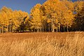 Ochoco National Forest Indian Prairie Fall color (36456351521).jpg