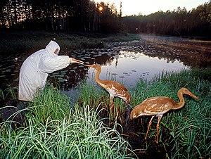 Oka Nature Reserve - Oka Zapovednik
