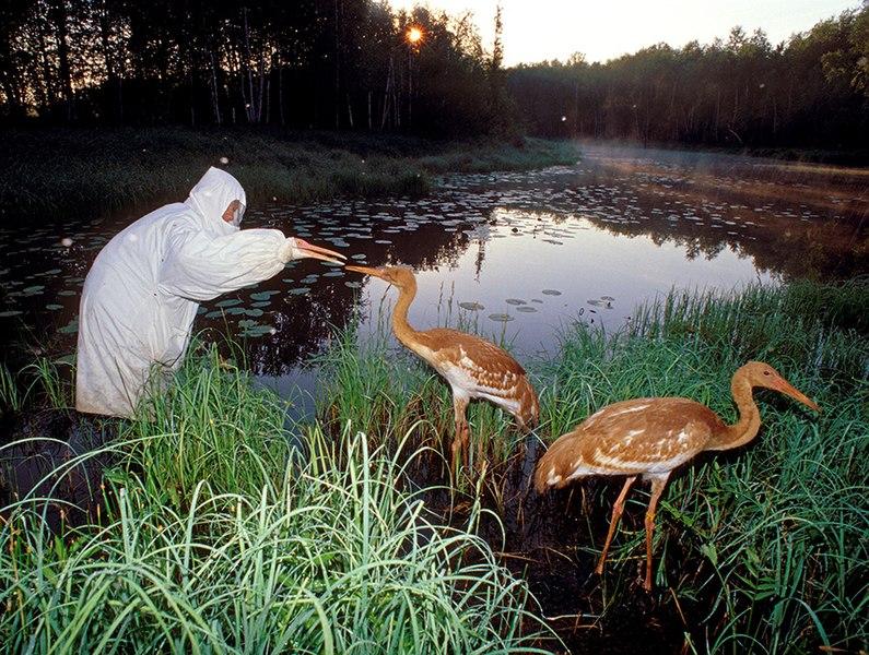 File:Oka nature reserve.jpg