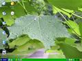 Olá! Dom-screenshot.png