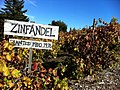Old Zin vineyard in Congress Spring, Saratoga.jpg