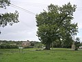 Old oak tree at the Penn Common turning, Bramshaw, New Forest - geograph.org.uk - 59886.jpg