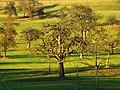 Olive - panoramio (1).jpg