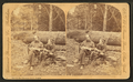 On the Clackamas River, Oregon, by Continent Stereoscopic Company.png