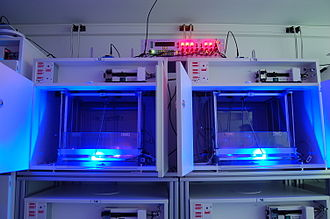 Optogenetics - Cages for rat equipped of optogenetics leds commutators which permit in vivo to study animal behavior during optogenetics' stimulations.