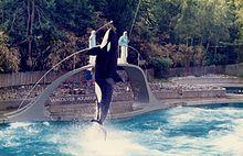 Orca-VancouverAquarium-1984.jpg